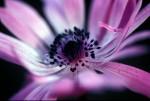 FLOW2004-It's purple