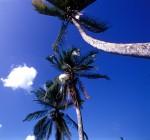 NATU2003-Tropisch perspectief - versie 2