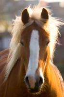 ANIM2005-PORTR-LIGHTHORSE_MG_7760