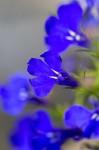 FLOW2005-DEEP BLUE_MG_9052 - versie 2