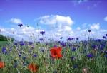NATU2003-Flowerland