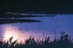 NATU2003-'T is nacht - versie 2