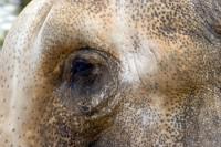 ANIM2005-PORTRET-ELEPHANT_MG_7905