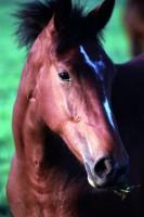 ANIM2003-Horse portrait