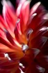 FLOW2007-DAHLIA 8-VX8P1021 - versie 2