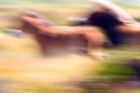 ANIM2005-HORSEMOVEMENT_X8P0628