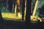 NATU2002-Light in the park  - versie 2