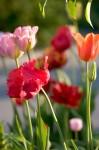FLOW2008-PHOTOPAINT 4-VX8P2083 - versie 2