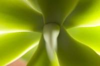 GREE2006-LIGHT AND GREEN-VX8P1147