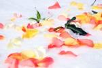 FLOW2005-Rosescape_X8P7679