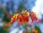 FLOW2002-Rich flower