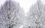 NATU2005-Lot of winter_X8P7613