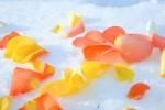 FLOW2005-Soul on Ice 2_X8P7695 - versie 2