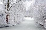 NATU2005-Snowy day_X8P7656 - versie 2