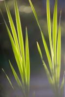 GREE2006-GREEN LIGHT 2-VX8P5158