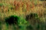 ONKR2004-Nature Paints - versie 2