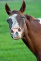 ANIM2006-BOLLY'S HORSE-VX8P4273