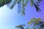 SKIE2003-Blue sky branches  - versie 2