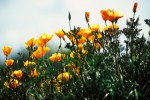 ONKR2004-Orange road