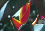 FLOW2001-Flower in light