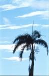 SKIE2003-Lichte staande  - versie 2