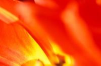 FLOW2004-Warmrood