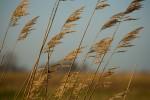 ONKR2005-Wind_X8P6245 - versie 2