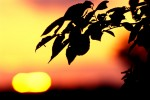 NATU2004-Evening - versie 2