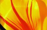 FLOW2002-Yellow Fever - versie 2